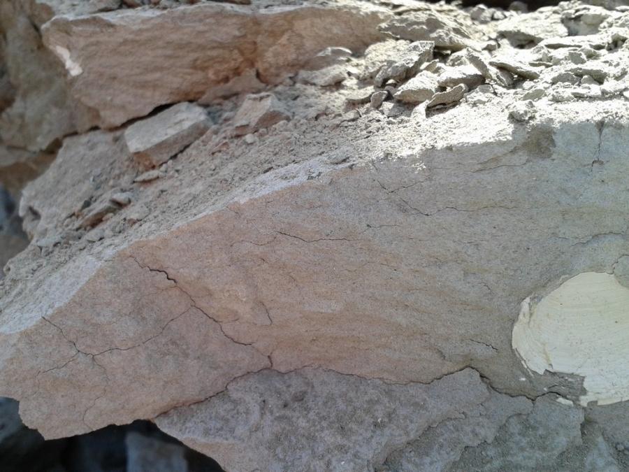 Ali vidiš veliko fosilov?