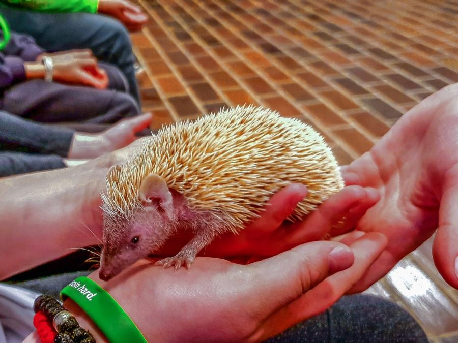 Obisk živalskega vrta v Ljubljani